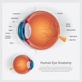 Human eye anatomy vector illustration Premium Vector | Free Vector #Freepik #vec… – Все подряд