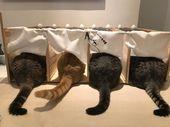 24 Asiaa Jotka Vain Kissaihmiset Ymmartavat Kissa Lemmikit Kissa Ja Kuvat