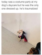 Story of my life. ~ dog , puppy , cute , adorable , funny , hilarious , fail , LOL , costume , Halloween , twitter