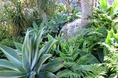 The 16 Best Plants for Drought-Tolerant Gardens-Pictures and Ideas