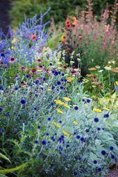 Blumenbeet in schönen bunten Farben, dass Lust auf Garten macht. Pflanzidee… – Garten & Gemüseanbau mit Kindern