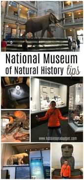 Nationwide Museum of Pure Historical past Ideas