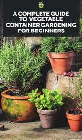 A Complete Guide to Vegetable Container Gardening for Beginners