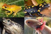 Resultado de imagen para nombres de animales anfibios   – trabajos pràcticos.