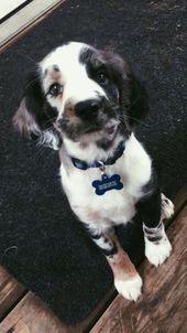über Kaufmann's Puppy Training #cuteanimals – Chiara Schüßler