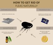 How To Get Rid Of Fleas In Carpet Borax For Fleas How To Get Rid Of Gnats Pest Control Fruit Flies