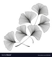 Ginkgo biloba leaves Royalty Free Vector Image