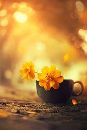 – # yellow  – Blumen