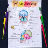 Medical anatomy, Nursing study, Study notes, Medical studies, Study motivation, …