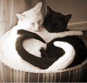 かわいい ねこ 動物 壁紙 待ち受け 猫 高画質の画像集374点 [… – cute