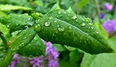 6 Möglichkeiten, übermäßigen Regen in Ihrem Garten zu bewältigen – Hobbyfarmen – Watering
