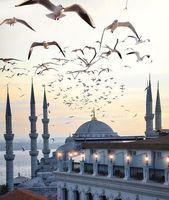 Sultan Ahmed Mosque #istanbul #turkey // by Julian…