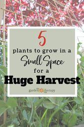 Wenn Sie auf kleinem Raum einen Gemüsegarten anbauen, – kleine Balkonideen   – Kleiner Balkon