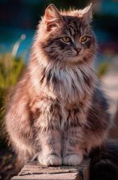 (notitle) – Katzen