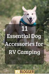 11 Essential Dog Accessories for RV Camping – RVBlogger