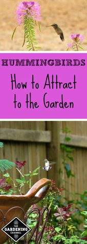 Entice Hummingbirds to Your Backyard – Gardening Channel