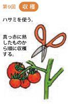 トマトの育て方 植え付けと支柱 暇人主婦の家庭菜園 楽天ブログ