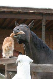 Ich dachte, dass es Hund und Katze sind, die sich nicht ausstehen können …   – Tiere