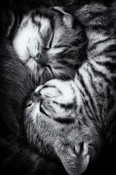 Yin y Yang de Andrea Jancova.   – Hugs