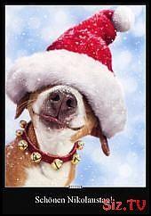 Schonen Nikolaustag Weihnachtshund Lustige Bilder Nikolaus Bilder