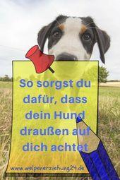 3 excelentes consejos para que tu perro te cuide   – Hund