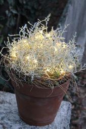 DIY-Ideen mit Silberkorbpflanzen – Blumen Flora-Line Tobias Kopp Grosshöc …   – weihnachtsdeko