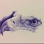 In Arbeit. Kugelschreiberzeichnung eines freihändig gezeichneten Adlers (oder? Ich bin schlecht darin) Mehr, um meine Techniken und Beobachtungsfähigkeiten zu verbessern. Gestützt auf ein Foto des talentierten Fotografen Chris Allsebrook, der die Verwendung des Fotos für Künstler gestattet hat