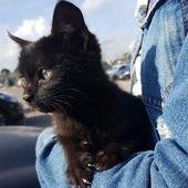 Schwarze Katzen sind kein Pech … Katzenrezepte monty the cat cats things cat base …