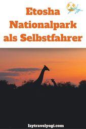 Reisebericht Namibia Etosha Nationalpark als Selbstfahrer – Namibia Tipps