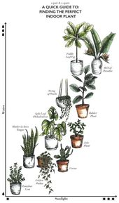 FINALLY, learn which house plants you can keep alive with you. A large plant gives every room a modern touch (without having to spend much).