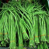 Photo of Yard Long Noodle Bean – Vigna unguiculata