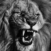 50+ Lion Tattoo Designs – #beto #designs #Lion #Tattoo