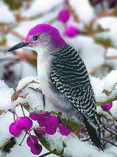 A purple woodpecker. Such a rare and beautiful creature. #colorfulbird …  – Vorlagen für Tuschemalerei