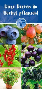 Diese Obstpflanzen kannst du im Herbst pflanzen!