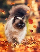 100 Fotos, die beweisen, dass Katzen das süßeste Tier der Welt sind   – Süße…
