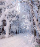 Folgen Sie dem Winterwunderland Finnland. Foto von #nature …