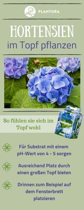Hortensien: Expertentipps zum Pflanzen, Pflegen & Schneiden – #Expertentipps #Ho…