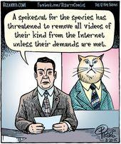 Katzenvideos. Bizarro von Dan Piraro. 20. März 2015
