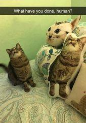 19 Clean Cat Memes Meme Cell laughs so hard   – puppies  – Animal Memes