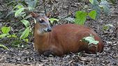 Bóvidos – Wikipedia  – Critters of all kinds, I love them all.