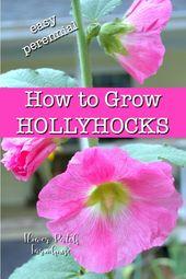 How to Grow Hollyhocks – Flower Patch Farmhouse