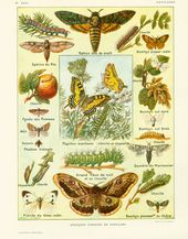 Sphinx Tete De Mort Piqure : sphinx, piqure, Idées, Entomology, Entomologie,, Insectes,, Coléoptère