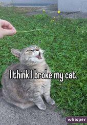 14 Mal dachten die Leute, dass ihre Katze nicht richtig funktioniert