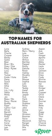 The Top Names for Aussies and Australian Shepherd Puppies  – puppies