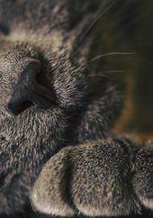 #Katzen   – catlover