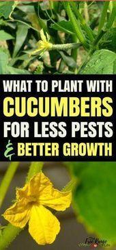 Gemüsegarten für Anfänger: Lernen Sie, wie man Gurken in Ihrem Garten pflanzt … #anfan  – Vegetable garden