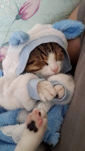 TOP 45 lustige Katzen Bilder – #babyhumorfunny #pictures #funnybabymemes #cats # …