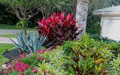 50 Awesome Tropical Garden Landscaping Ideas   – tropical gardens