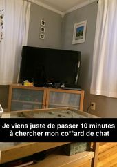 30 Snapchat de chats absolument hilarants (web page 4)