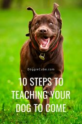 10 Steps To Teaching Your Dog To Come Dog Zoomies Dogs Dog